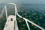isnt that so cool? its taken on a boat looking at those sting ray-like things!