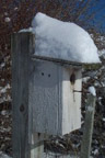 The bluebird house with a wee bit