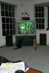 Our cats just love watching television!