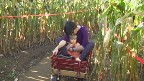 in the big corn maze